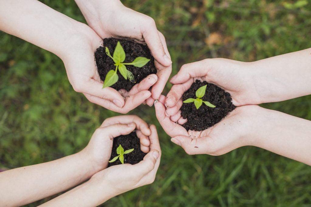 Sensibilisation à l'agro-écologie et permaculture